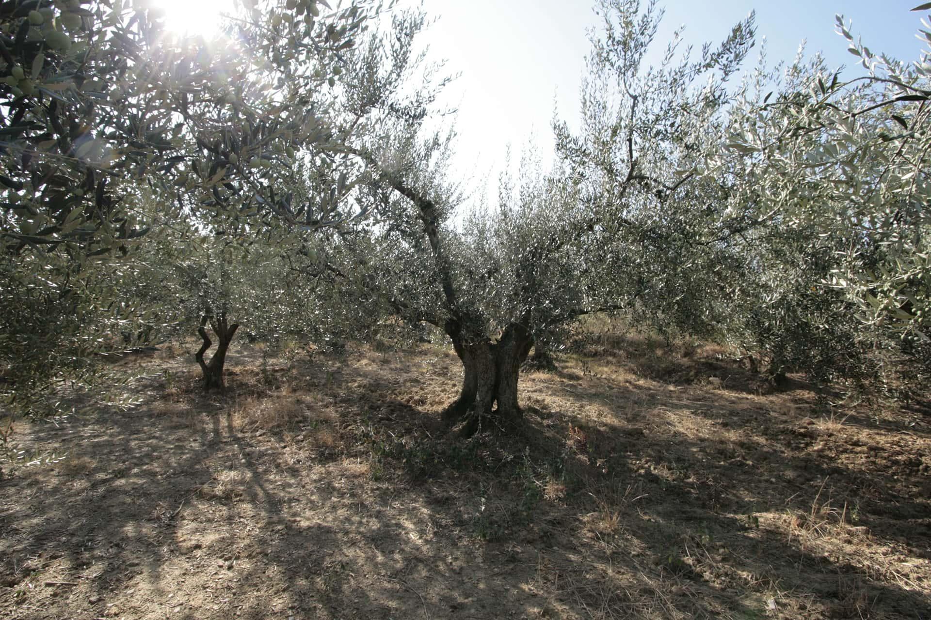Tour in bici, trekking, vendemmia e cena in agriturismo in Toscana